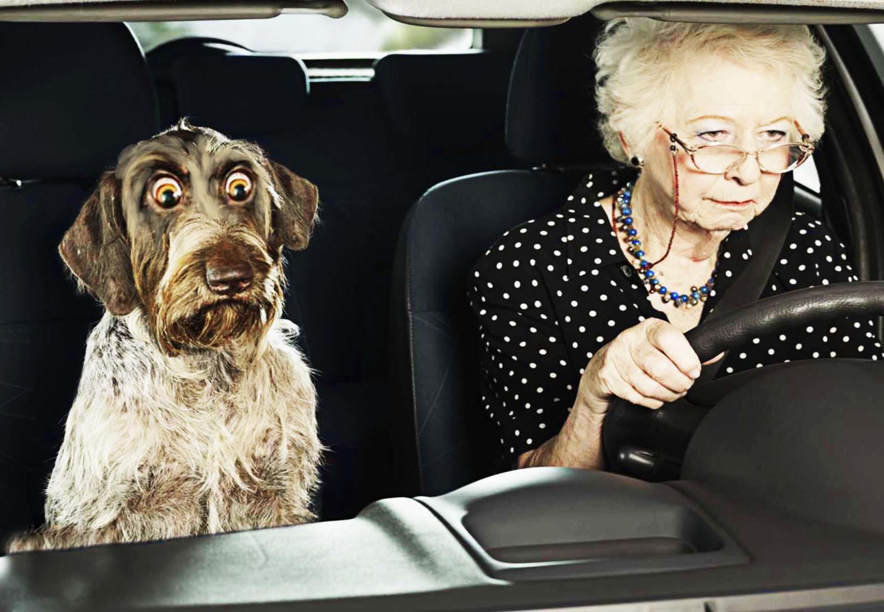 бабушка с собакой.jpg